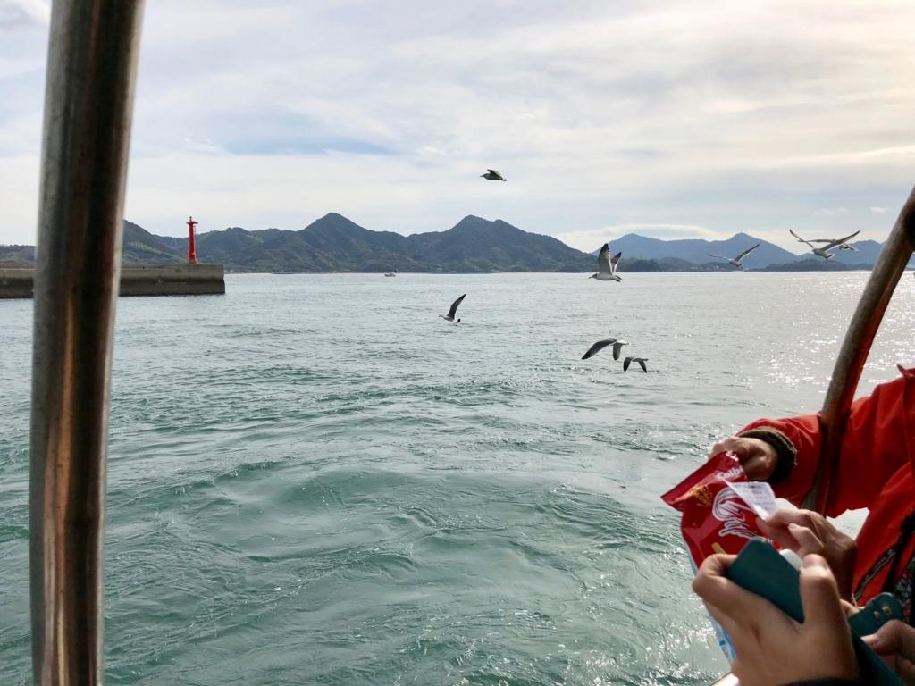 三原港からうさぎ島へ「ラビットライン」走行中 追ってくるカモメ 須波港周辺