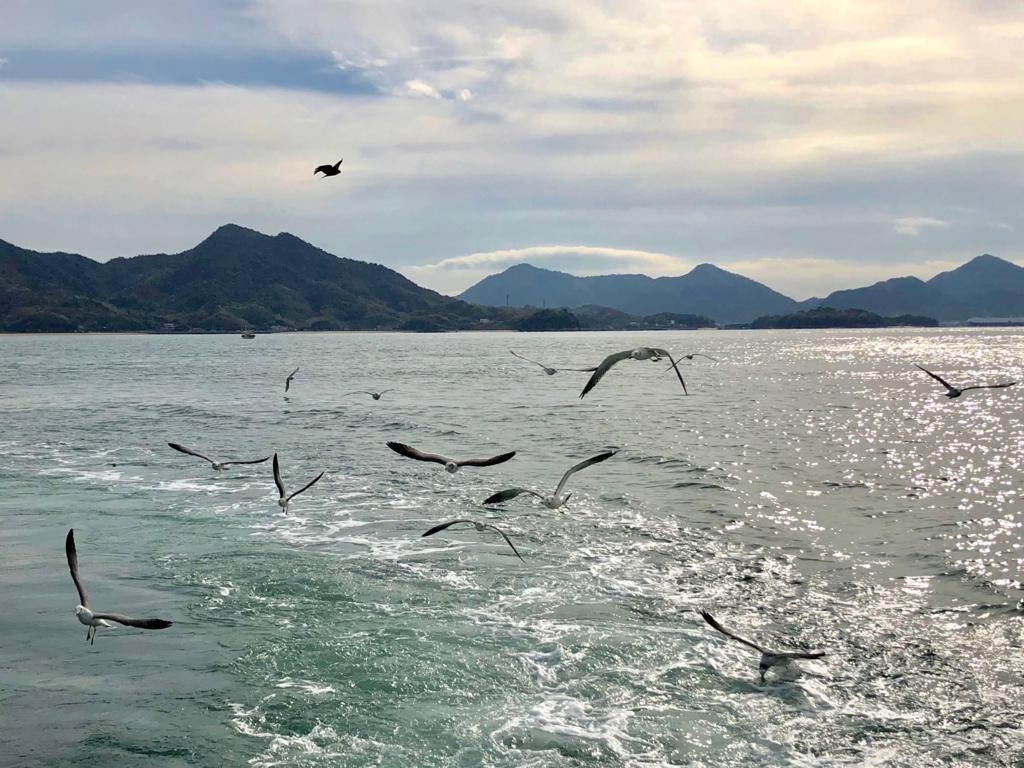 三原港からうさぎ島へ「ラビットライン」走行中の船尾に たくさんのカモメ