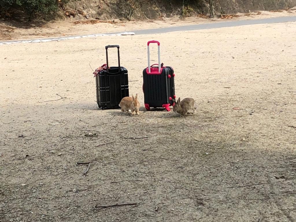 2017年11月後半 広島県 大久野島(うさぎ島) キャリケースを引きずって休暇村へ