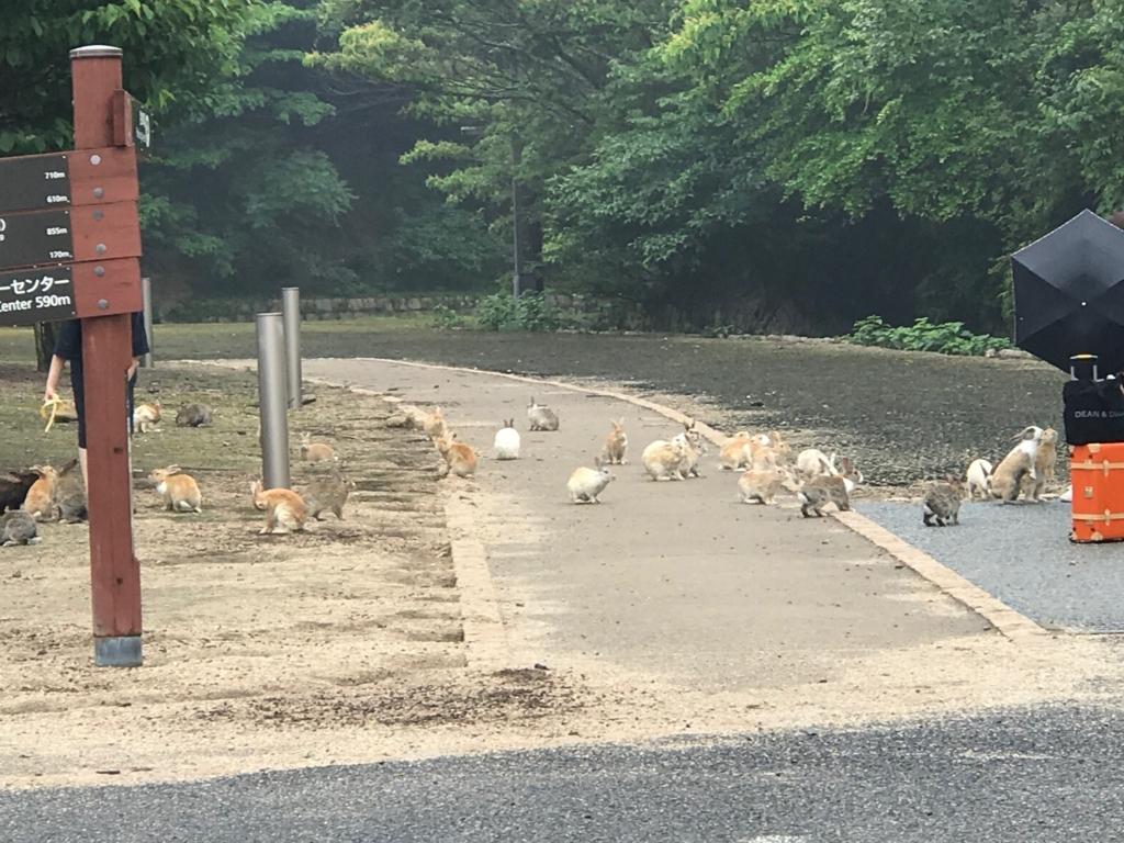 2017年6月頃 広島県 大久野島(うさぎ島) 第2桟橋周辺 群がるうさぎさん達