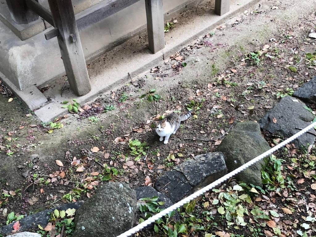 広島県 尾道 「猫の細道」天寧寺三重塔 本物の猫さん