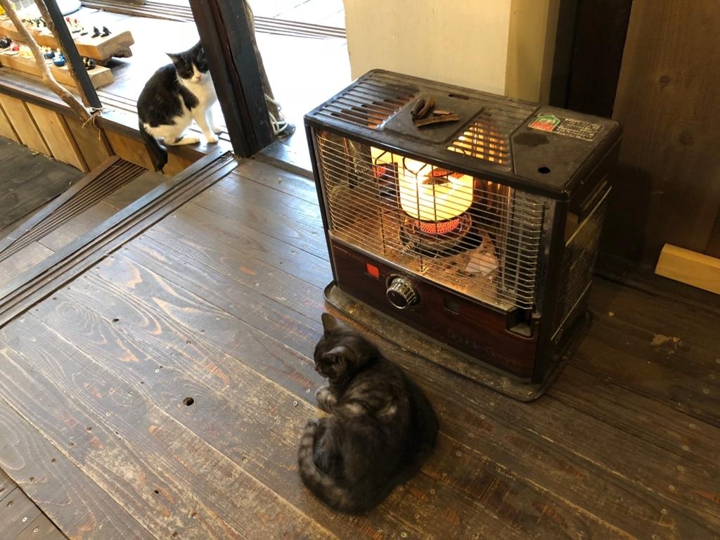 広島県 尾道 「猫の細道」ねこ雑貨のお店 「Le chat」 子猫がマッタリー