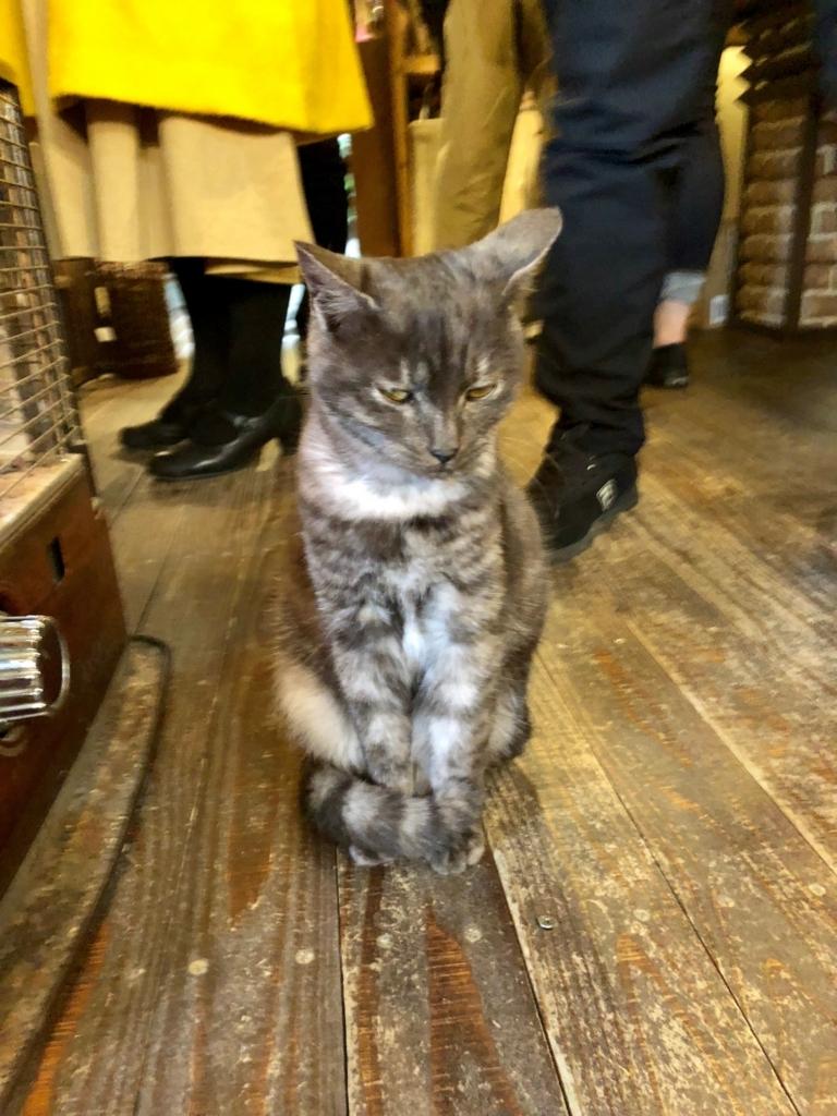 広島県 尾道 「猫の細道」ねこ雑貨のお店 「Le chat」 子猫 起こしてしまいました
