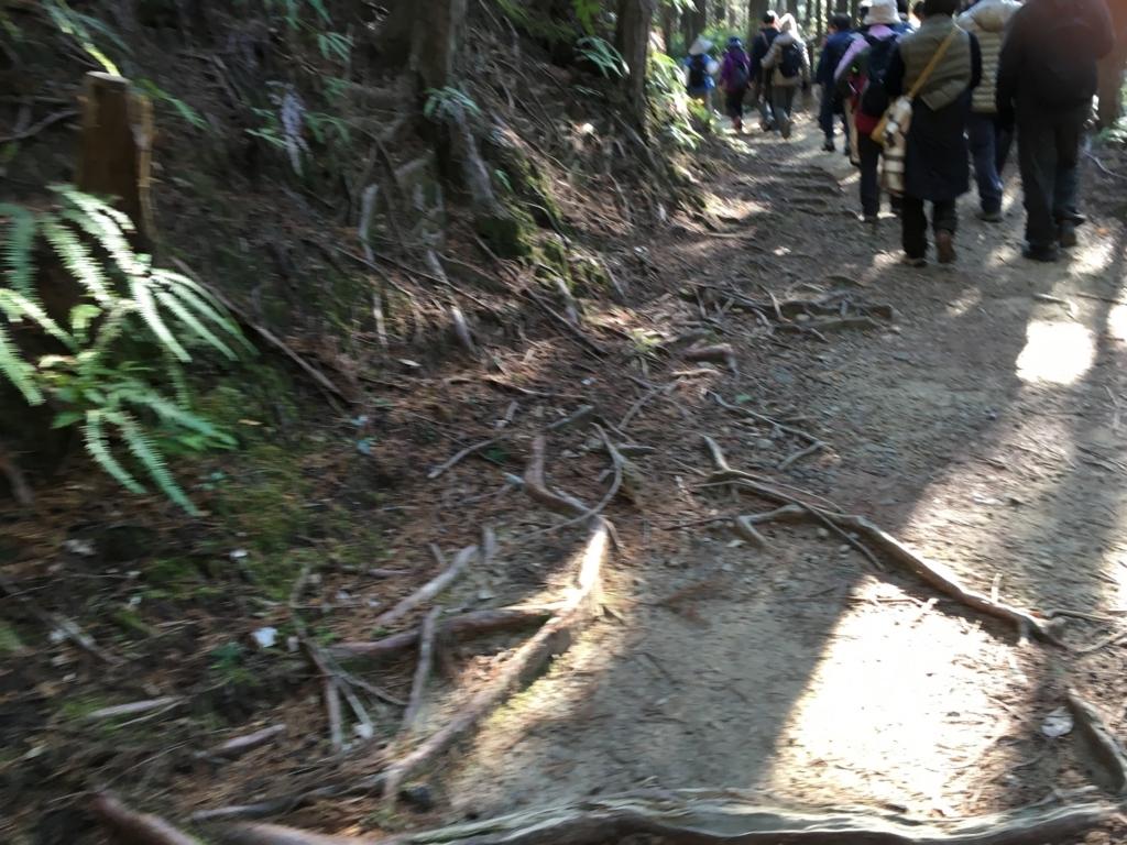熊野古道 中辺路 道にはたくさんの木の根が露出