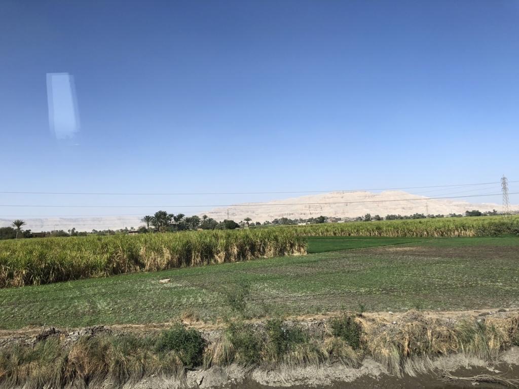 エジプト ルクソール 西岸 出荷時期 さとうきび畑