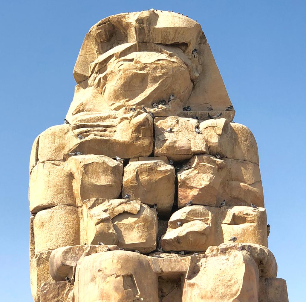 エジプト ルクソール西岸 「メムノンの巨像」たくさんの 鳩が飛び交う巣に
