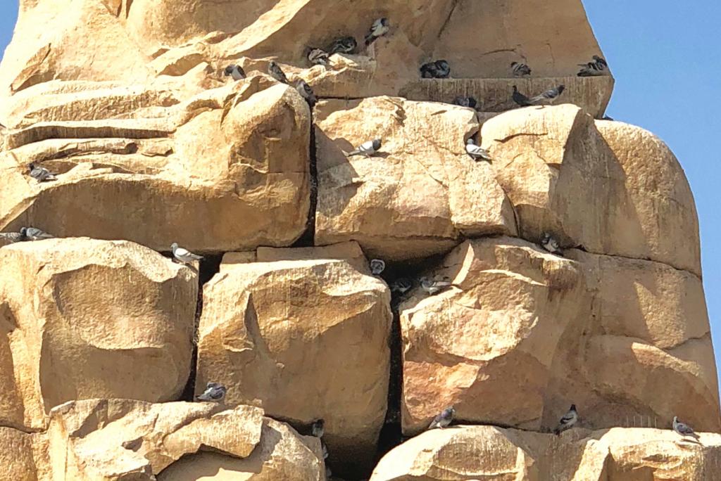 エジプト ルクソール西岸 「メムノンの巨像」たくさんの 鳩が飛び交う巣に 拡大