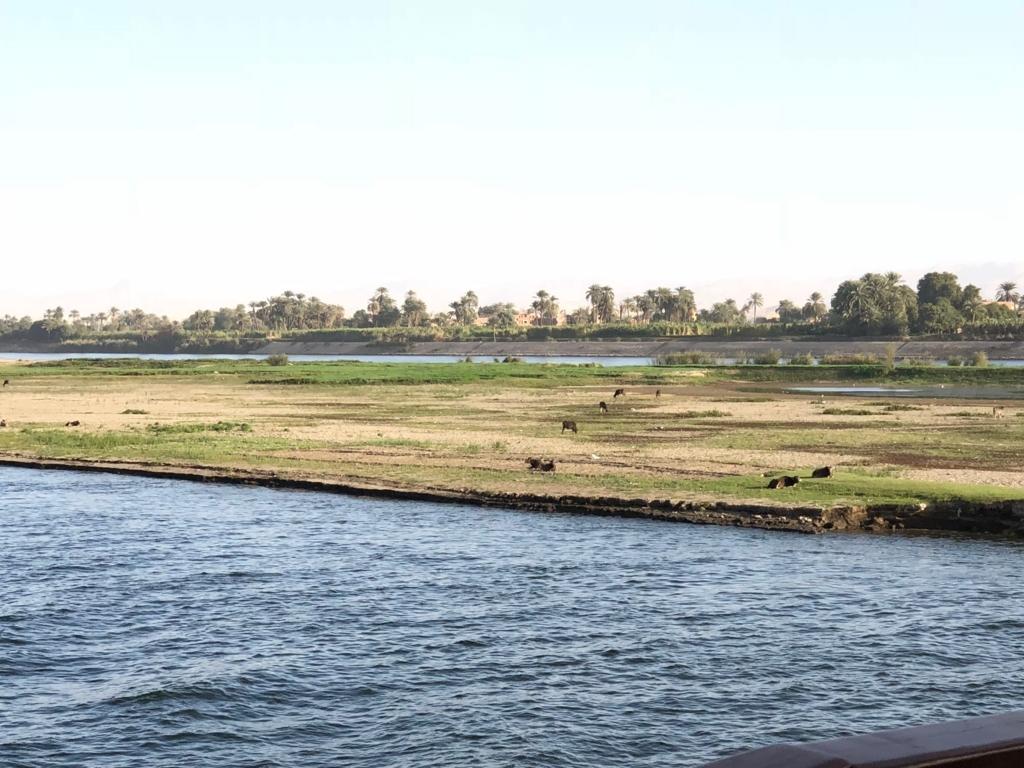 エジプト ナイル川 ルクソール周辺 中州で放牧
