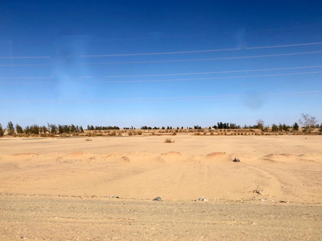 エジプト アブシンベル神殿への道 75号線 車窓 ナツメヤシの畑