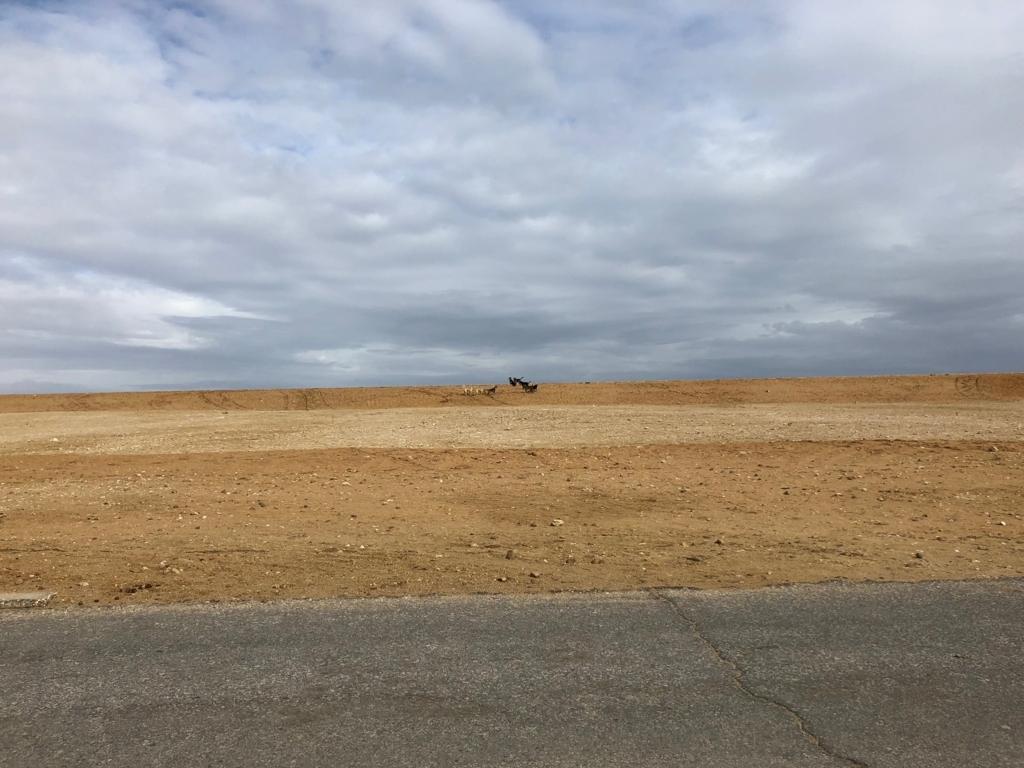 エジプト ギザ 3大ピラミッド「パノラマポイント」 周囲の風景風景 水平線には野犬