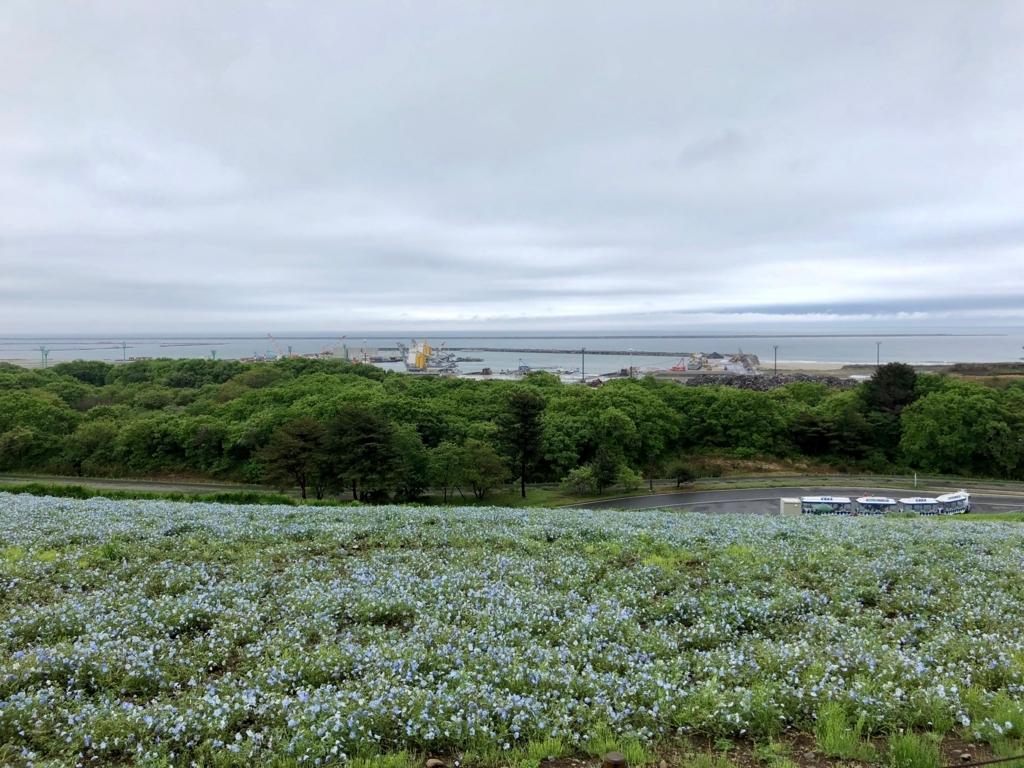 「国営ひたちなか海浜公園」ネモフィラ 「みはらしの丘」頂上 反対側は海 width=