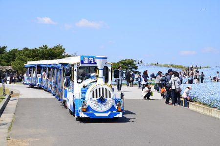 「国営ひたちなか海浜公園」シーサイドトレイン by hitachikaihin.jp