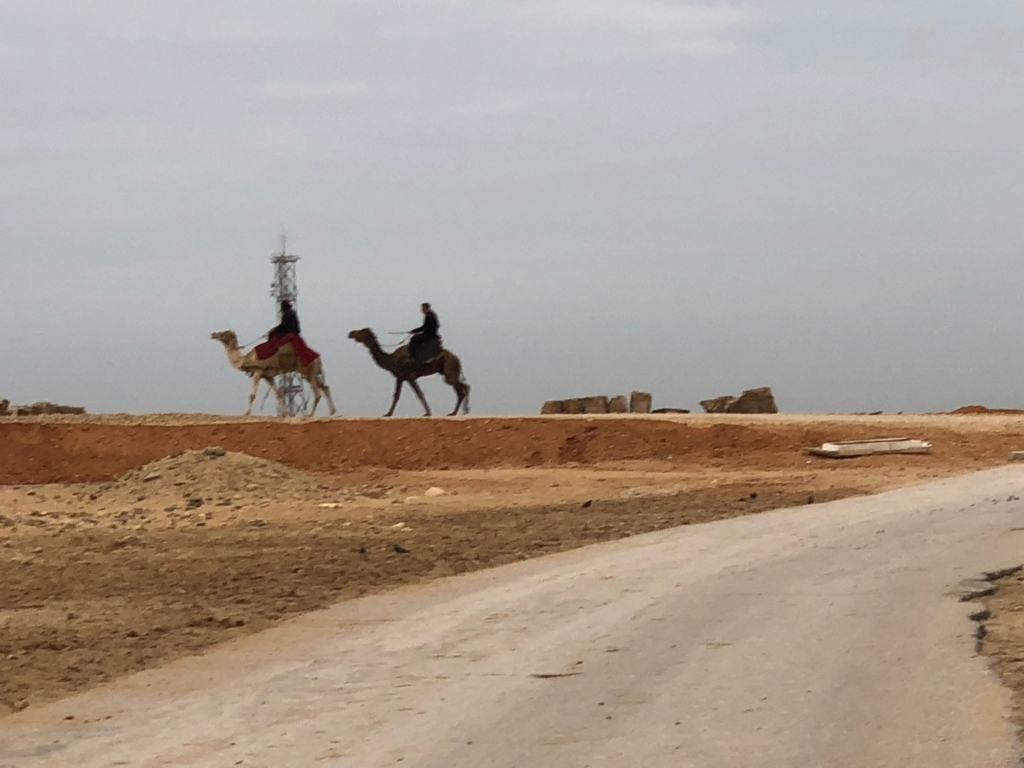 エジプト ギザ 3大ピラミッドエリア 開場前 ラクダさん出勤