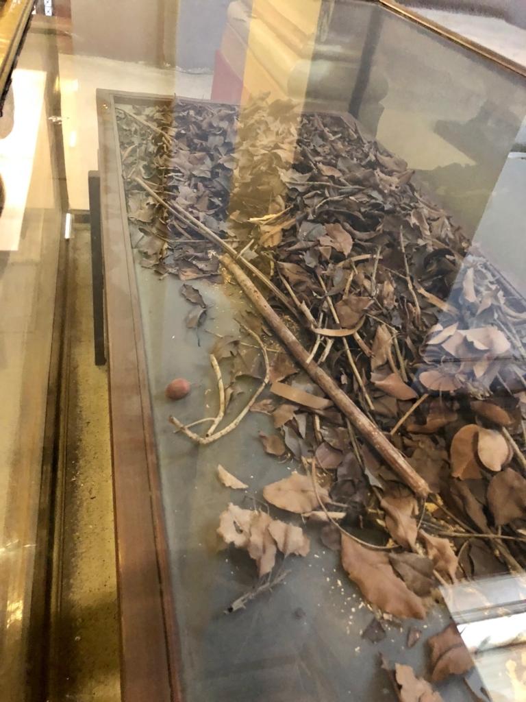 エジプト カイロ 「エジプト考古学博物館」ツタンカーメン ヤグルマギクの花束