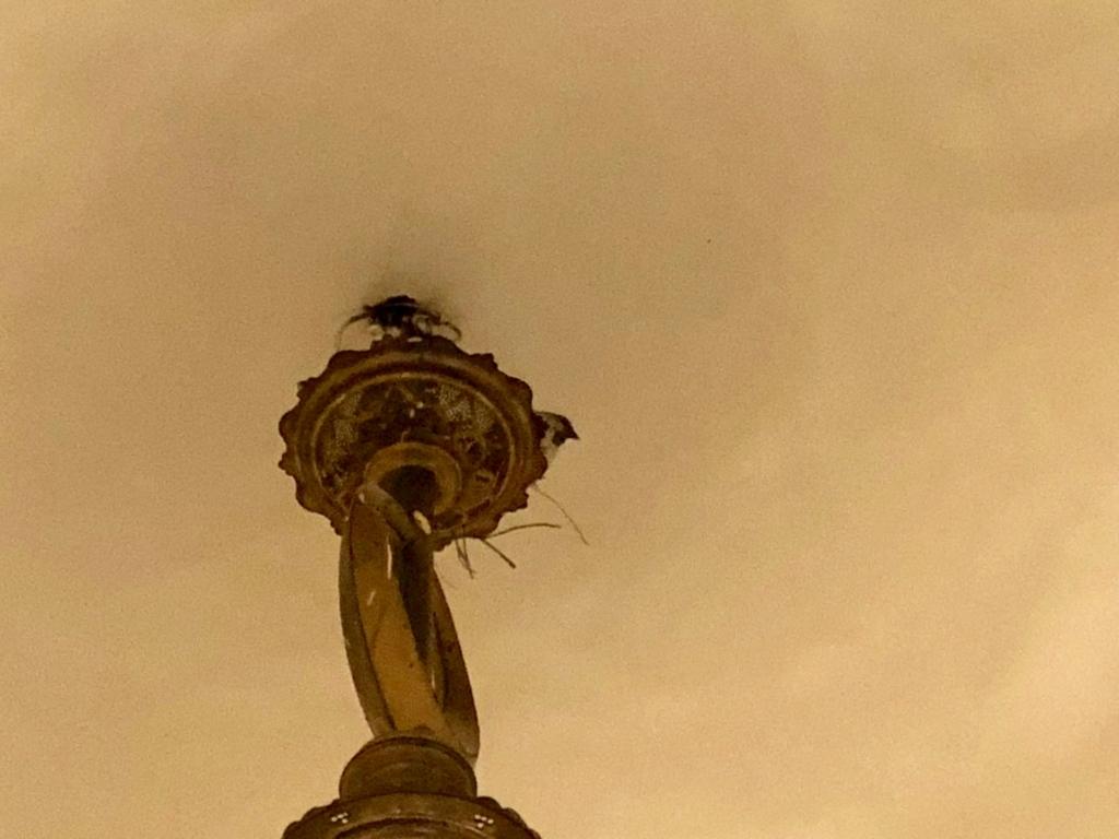 エジプト カイロ アズハルパーク 「Lakeside Cafe」照明に鳥の巣