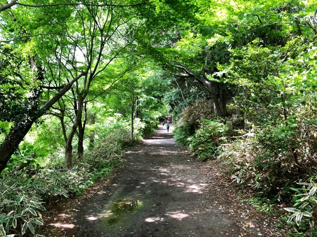2018年5月 高尾山 一号路 金比羅神社から表参道へ