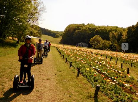 「国営武蔵丘陵森林公園」2018年4月中旬 ポビー畑をぐるっと