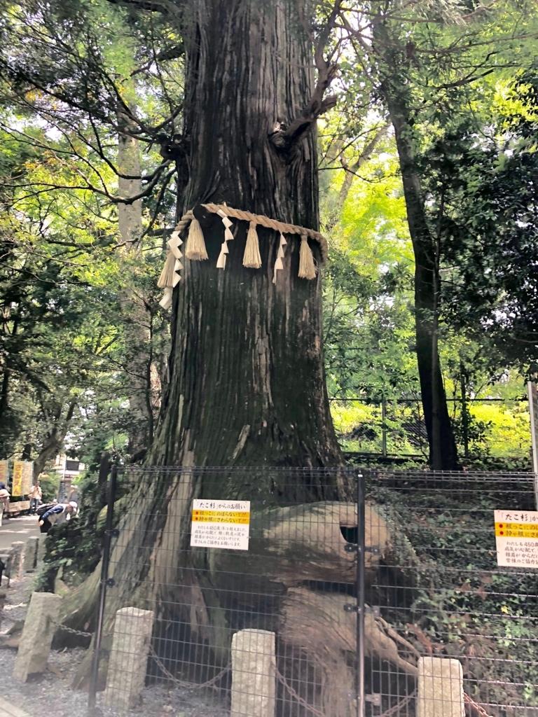 2018年5月 高尾山 たこ杉
