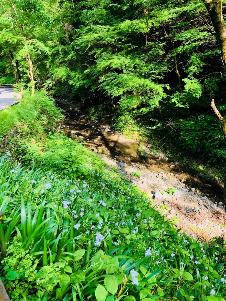 2018年5月 高尾山 6号路 舗装道路 片側には、水の流れと綺麗な花々