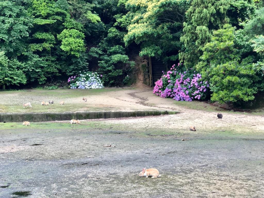 2018年6月うさぎ島(大久野島)パターゴルフ場近く 紫陽花満開