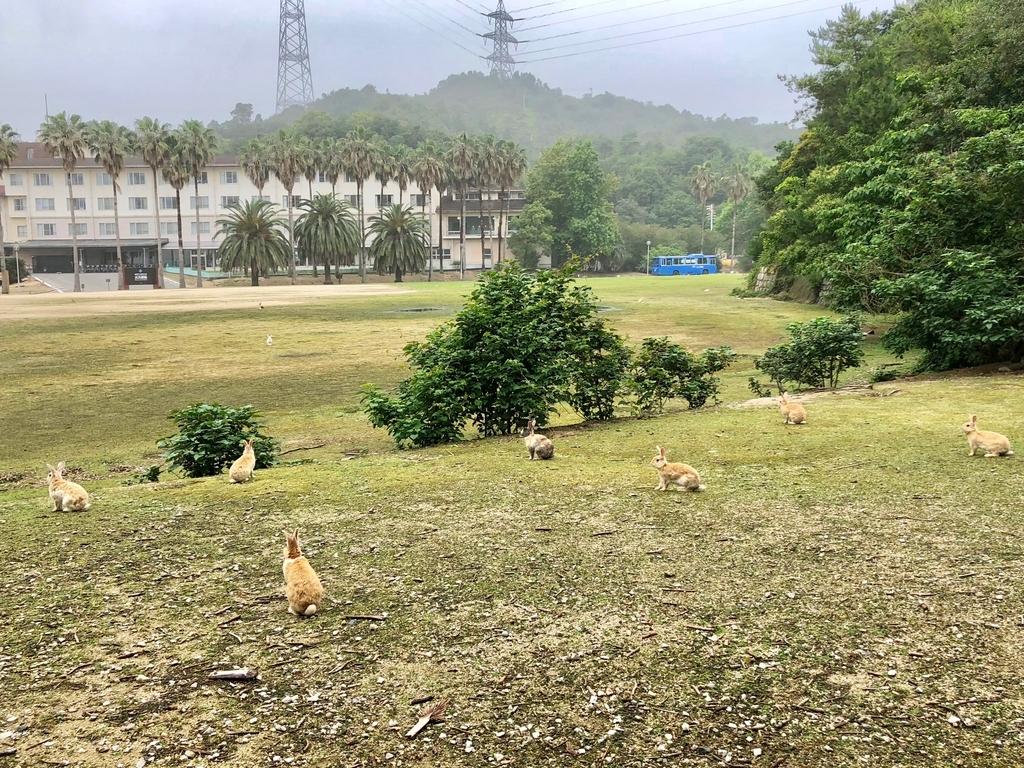 2018年6月うさぎ島(大久野島)パターゴルフ場近く 同じ方向を見据える うさぎさん達