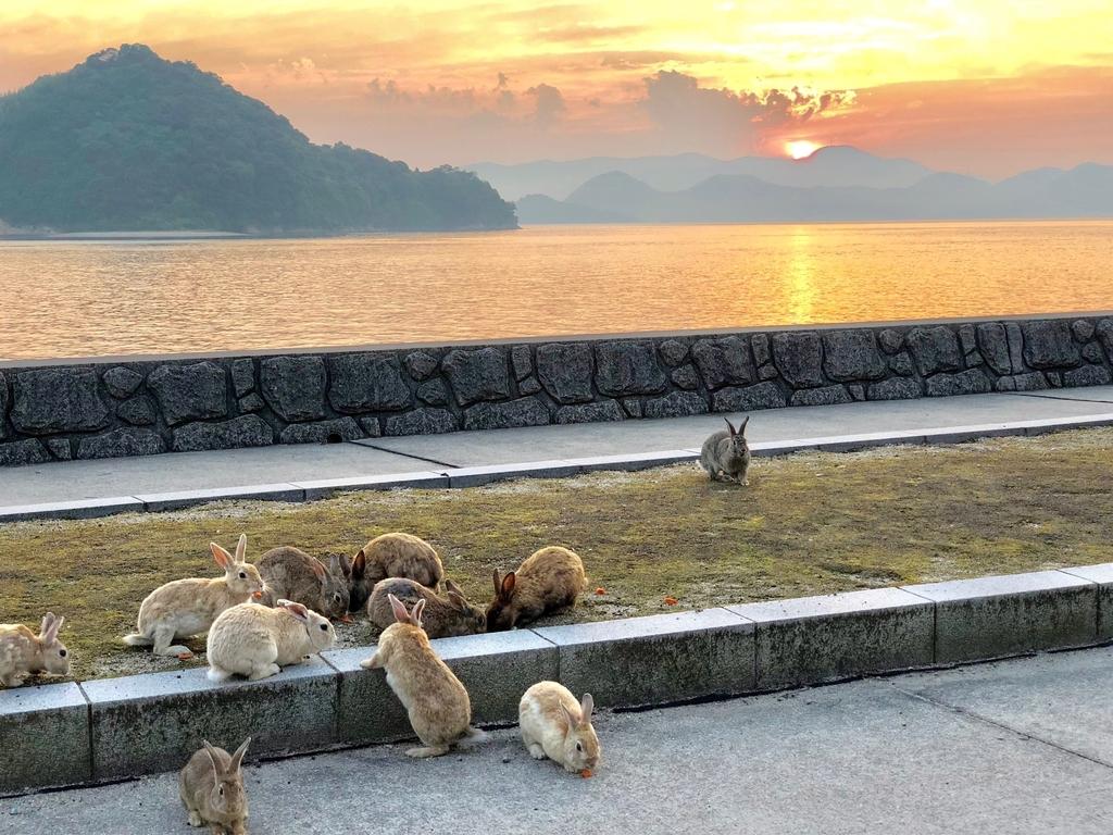 2018年6月うさぎ島(大久野島) 夕日