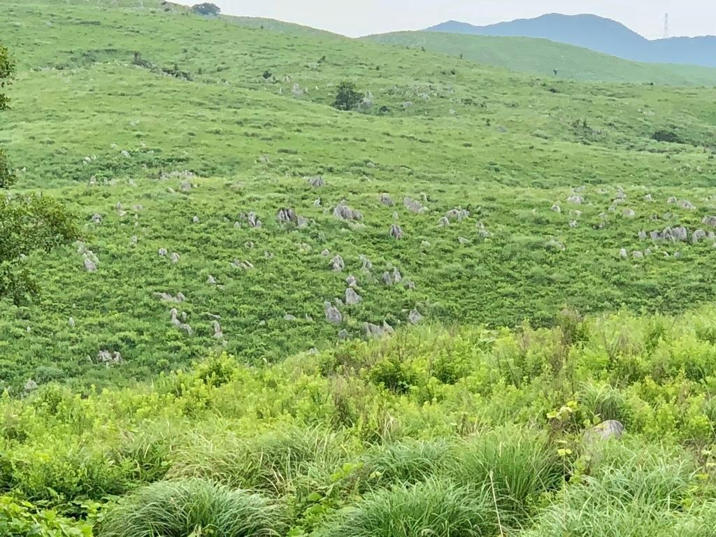山口県秋吉台国定公園 秋吉台 展望台から徒歩7,8分の草原