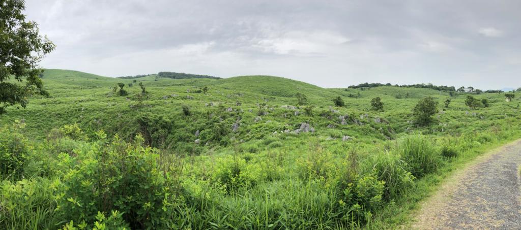 山口県秋吉台国定公園 秋吉台 展望台から徒歩7,8分の草原 パノラマ写真