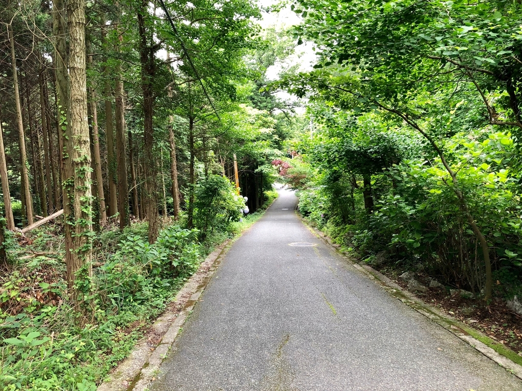 山口県秋吉台国定公園 秋吉台 秋芳洞 エレベータへの道 続く下り坂