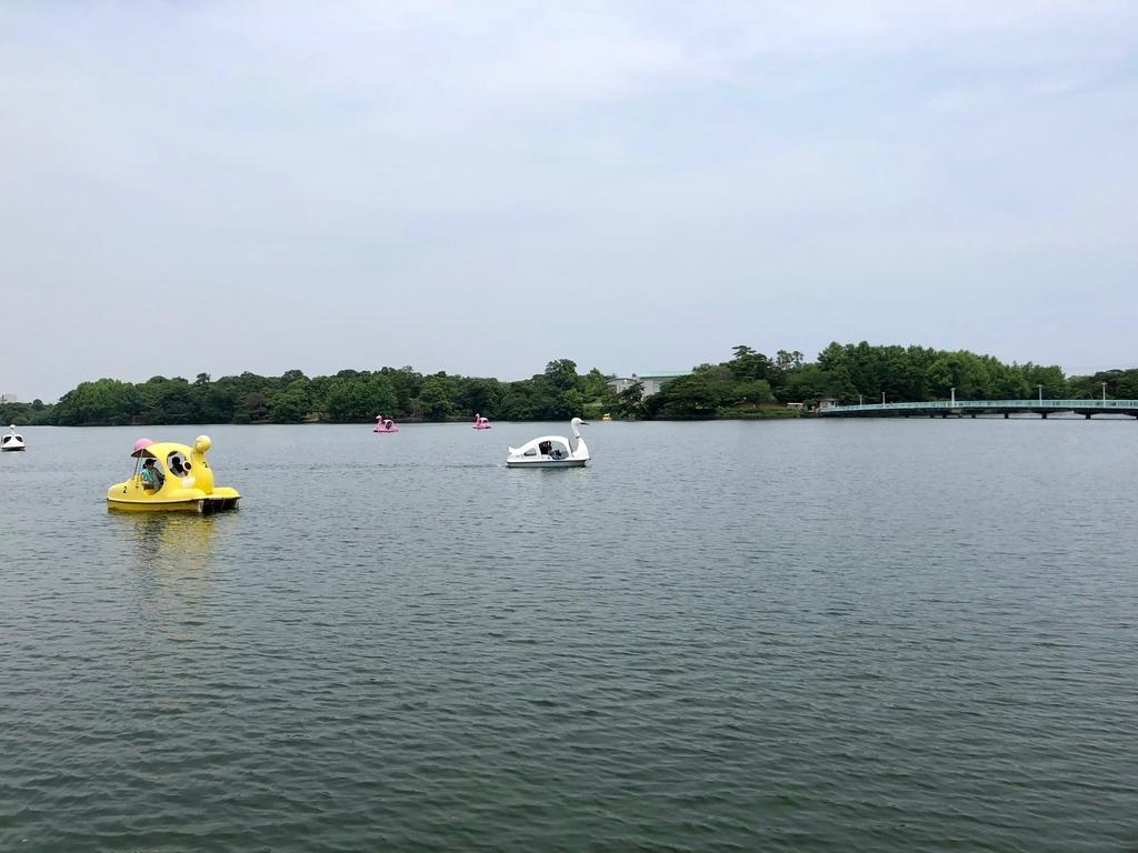 山口県 宇部市 「ときわ公園」常磐湖には、白鳥ボート