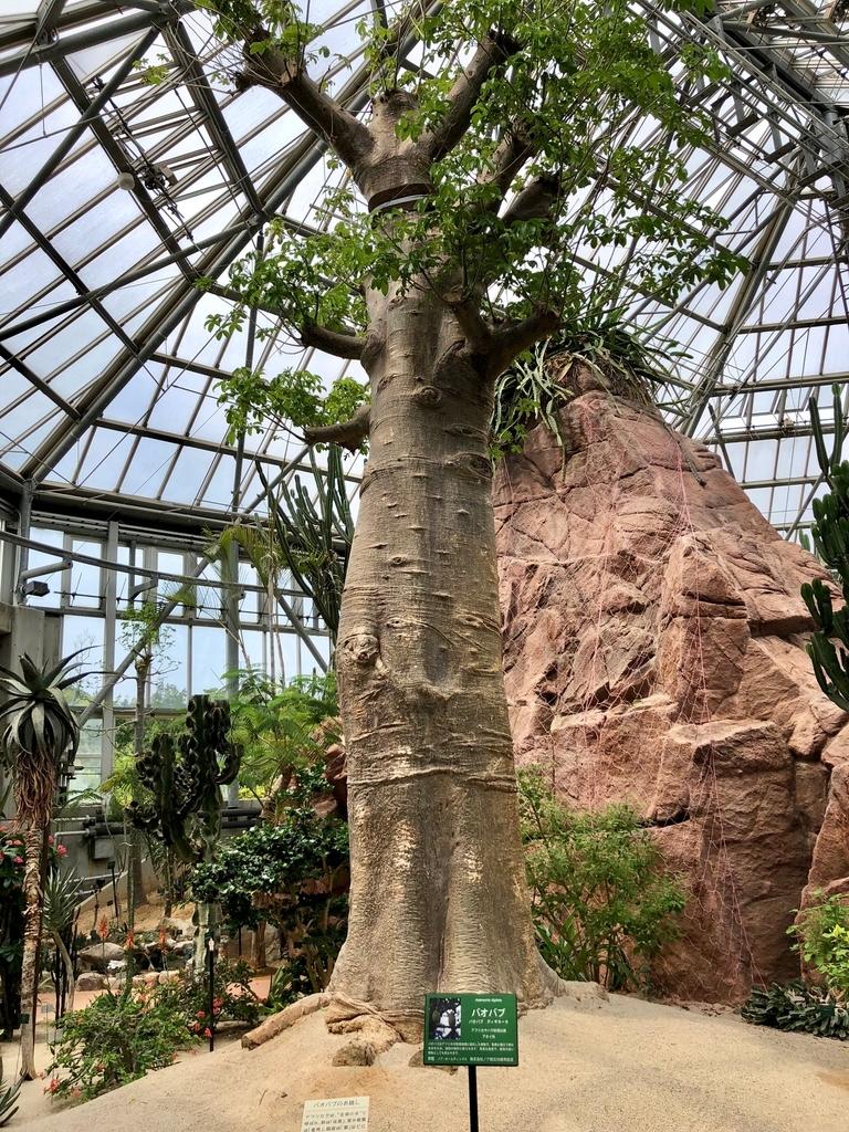 山口県 宇部市 「ときわ公園」ときわミュージアム 世界を旅する植物園 「バオバブ」の木