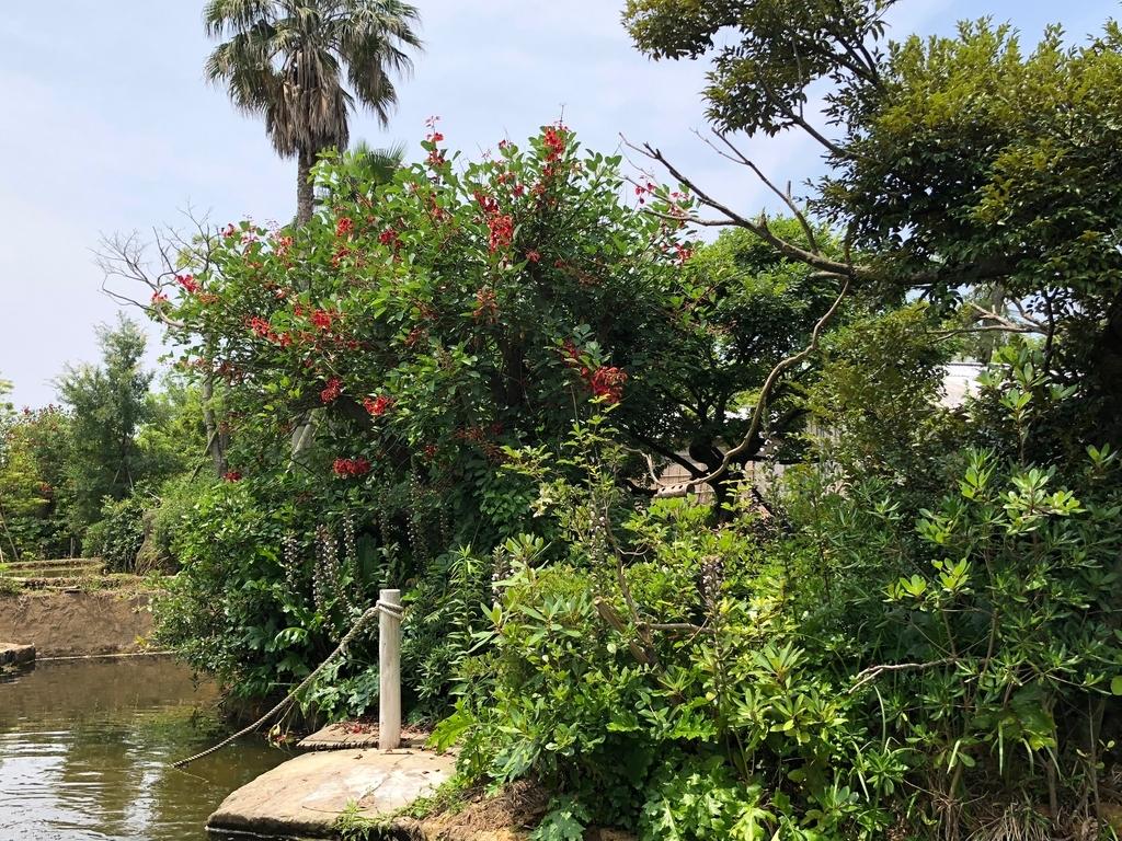 山口県宇部市「ときわ動物園」中南米の水辺ゾーン