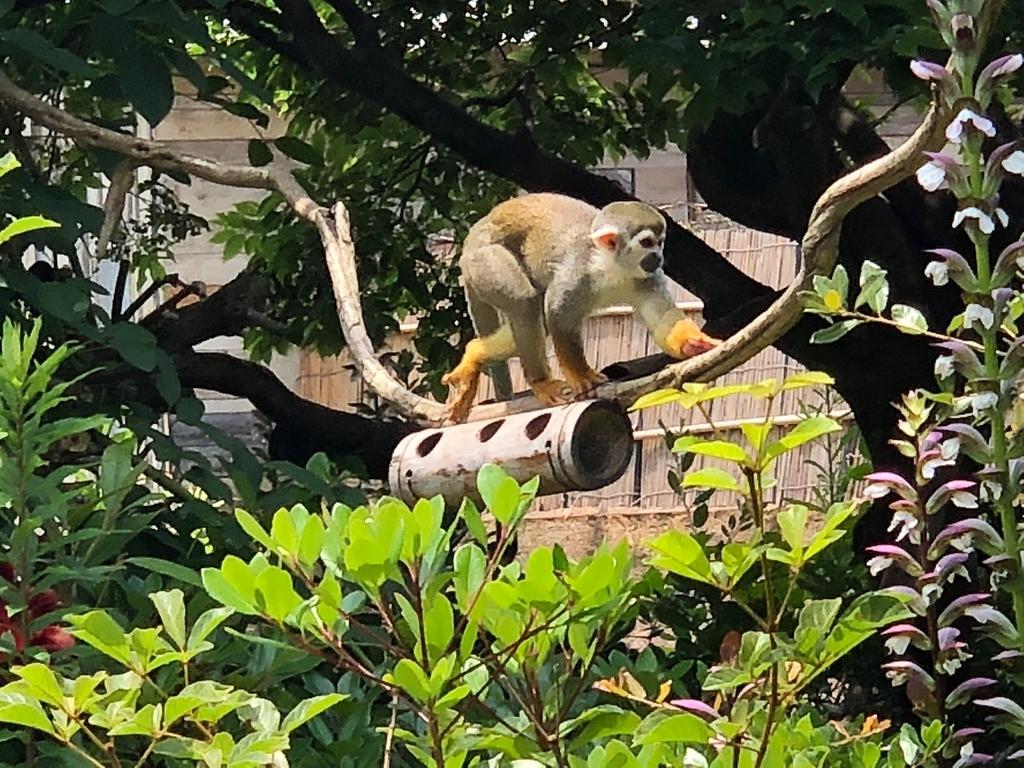 山口県宇部市「ときわ動物園」中南米の水辺ゾーン「リスザル」