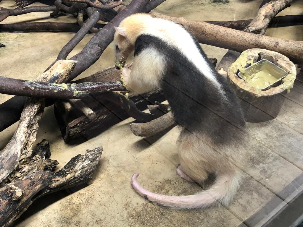 山口県宇部市「ときわ動物園」中南米の水辺ゾーン「ミナミコアリクイ」