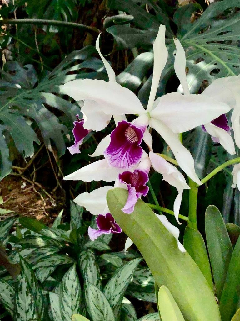 f山口県 宇部市 「ときわ公園」ときわミュージアム 世界を旅する植物園 たくさんの花々