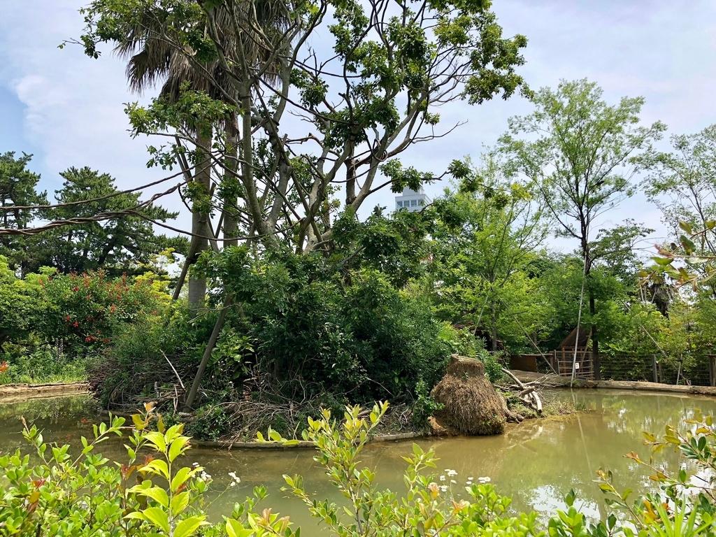 山口県宇部市「ときわ動物園」中南米の水辺ゾーン小島