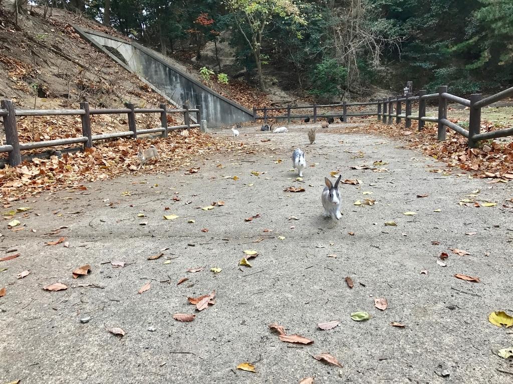 うさぎ島(大久野島)12月の発電所跡