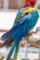 (8) ふれあい動物の森 インコ