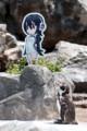 [東武動物公園][けものフレンズ][ペンギン][フルル][グレープ君] (7) ペンギンの大地 フンボルトペンギン フルル&グレープ君