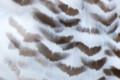 [東武動物公園][フクロウ] (4) 猛禽類 シロフクロウ 羽根 ( 等倍切り出し )
