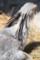 (4) 猛禽類 ヘビクイワシ