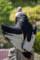 (4) 猛禽類 アンデスコンドル