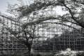[東武動物公園][けものフレンズ][ジェットコースター] 水上木製コースターレジーナ