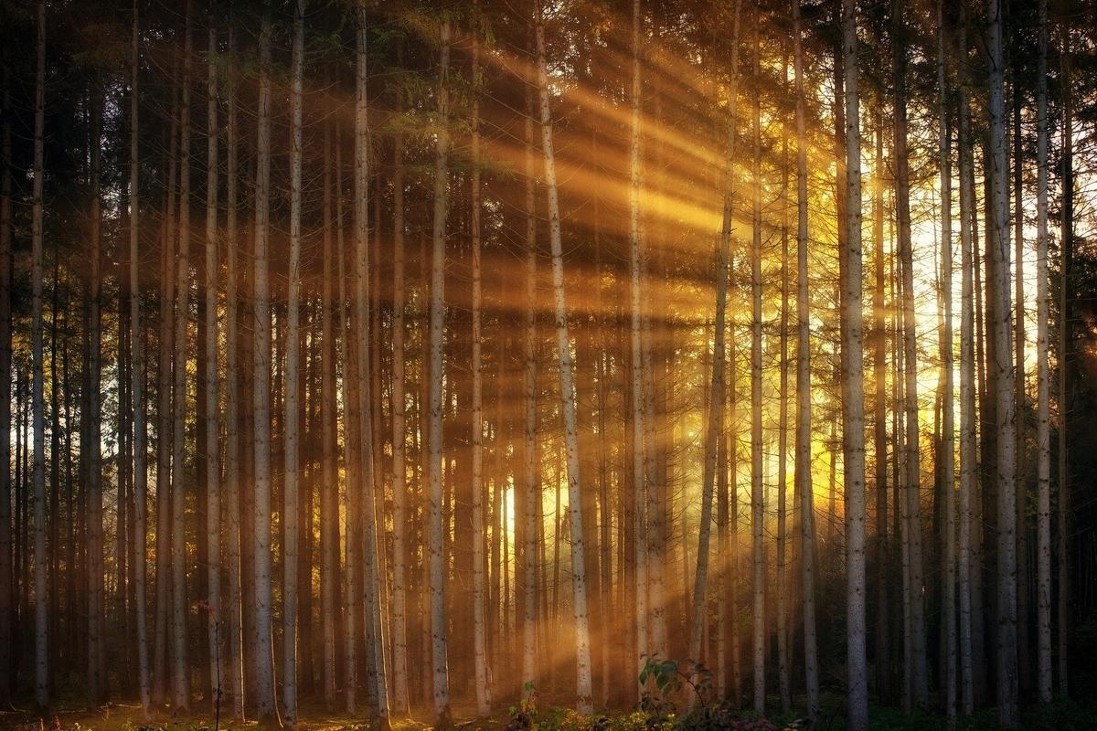 朝日を浴びる森