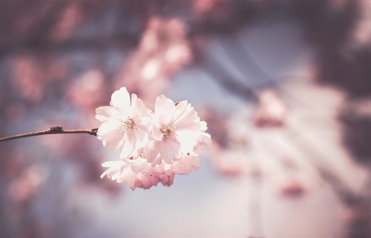 春のイメージ