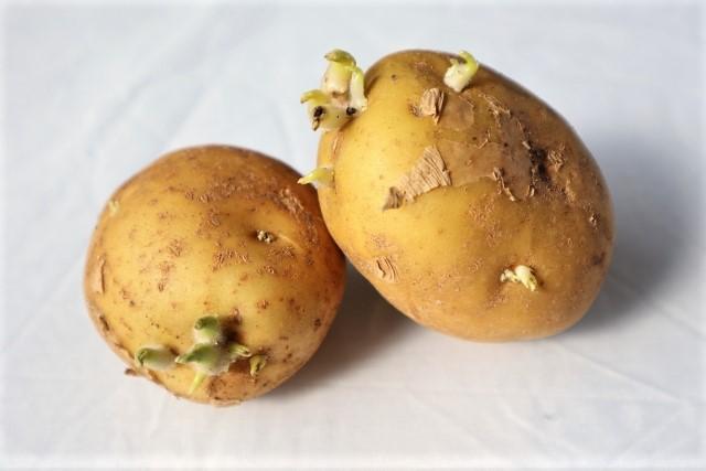 芽が出たジャガイモ