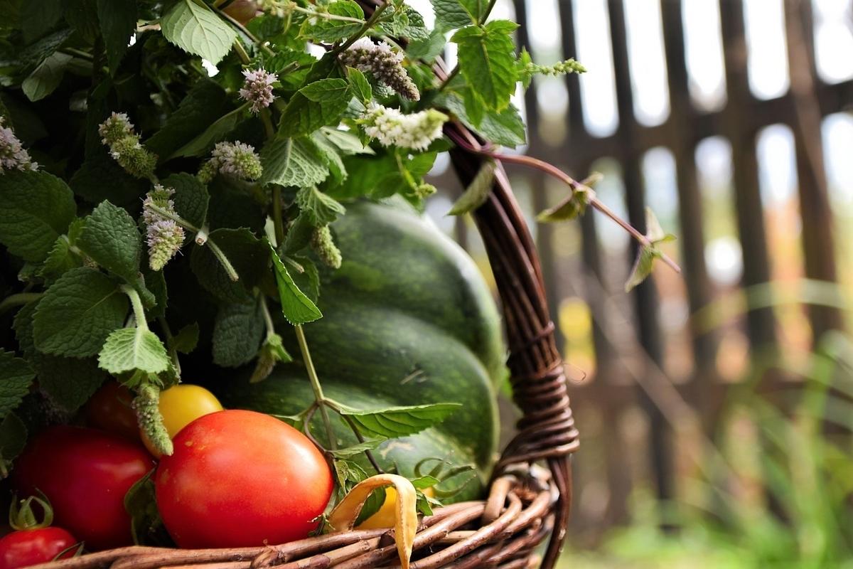 夏野菜の話