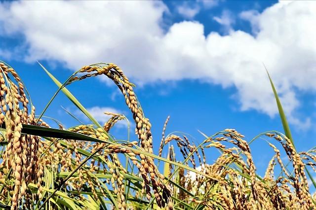 お米の期限