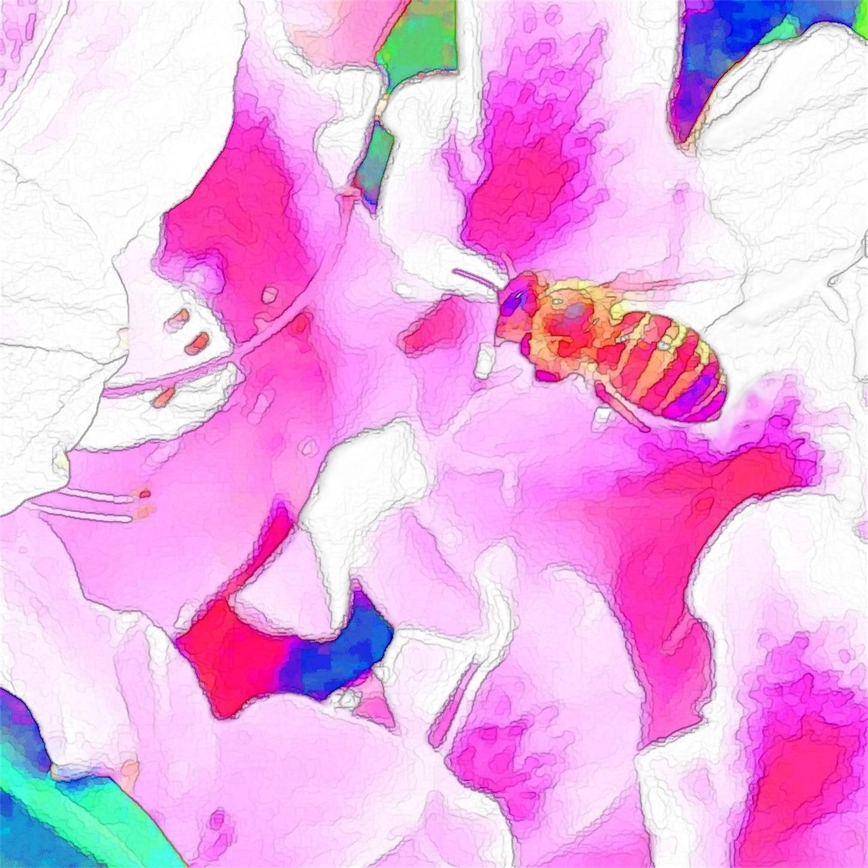 f:id:raspberrychoco:20200517054618j:image