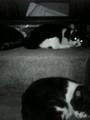 [cats]